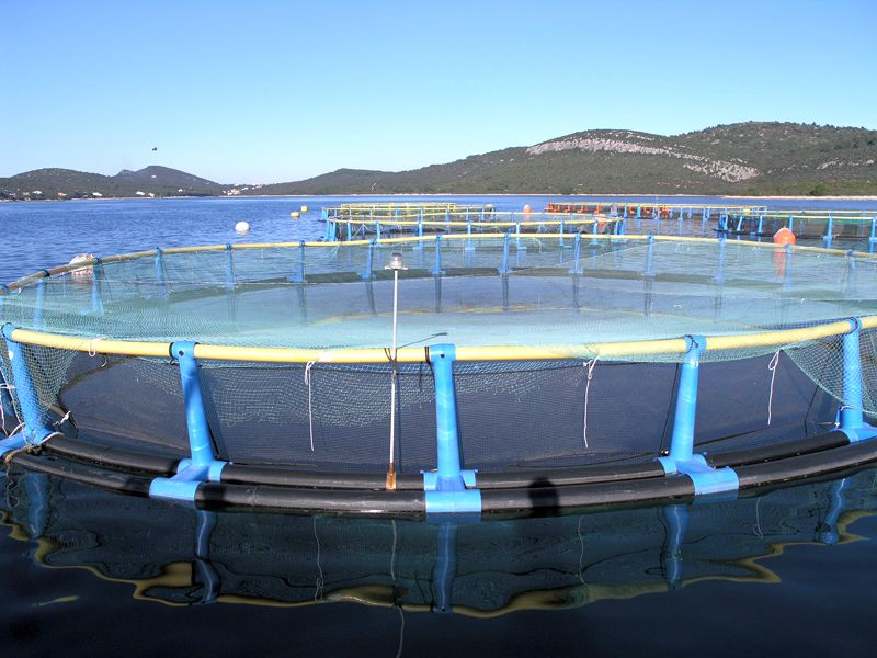 Uzgajališta ribe