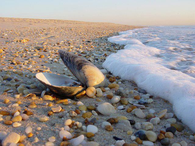Školjka na plaži