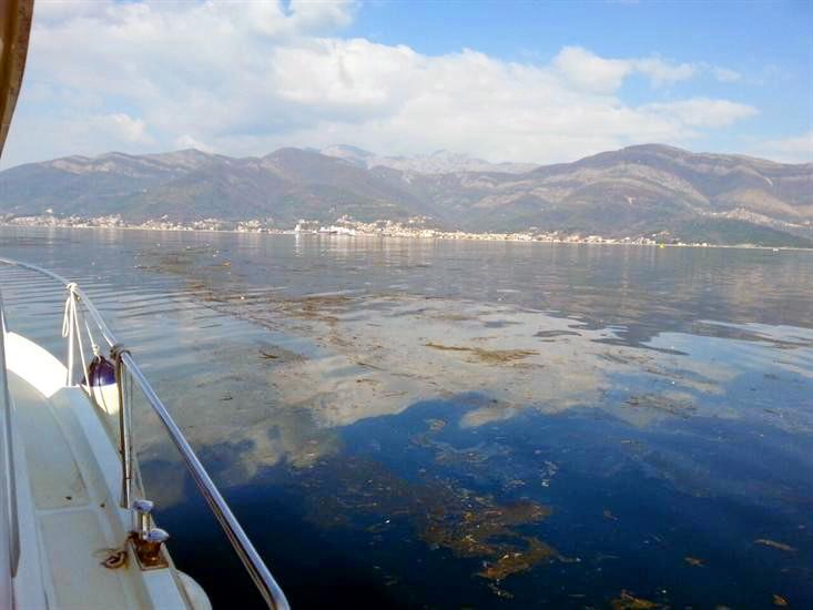 Mrlja u Tivatskom zalivu