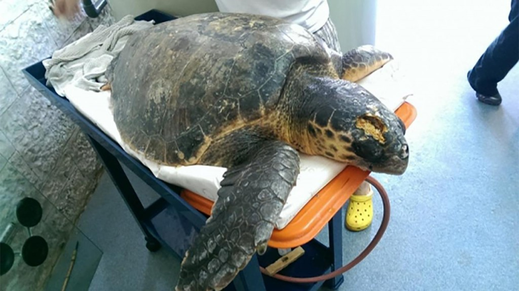 Morska kornjača