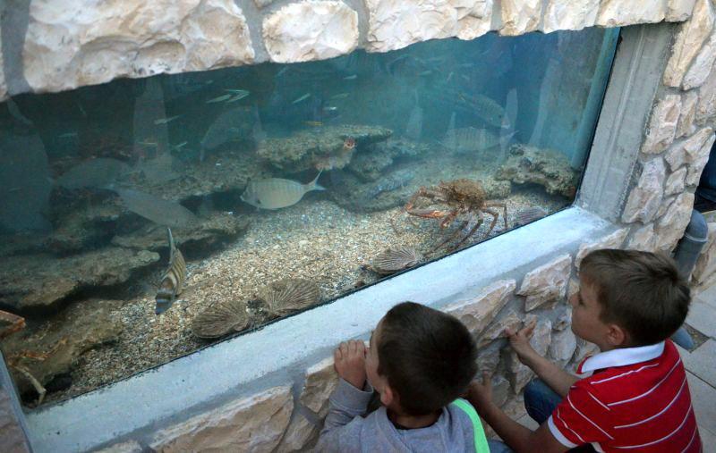 Otvorenje morskog akvarija na novigradskoj rivi