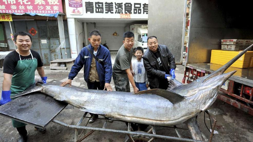 Kineski ribari sa sabljarkom