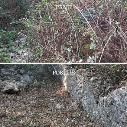 Vjeverice čiste kotorske zidine