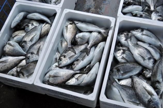 Uzgajalište ribe
