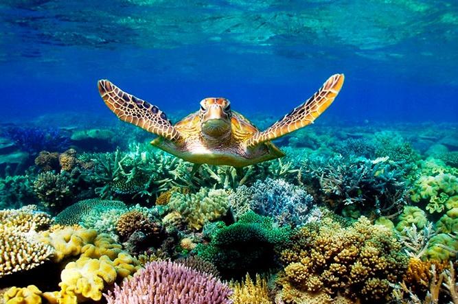 Australija koralni greben