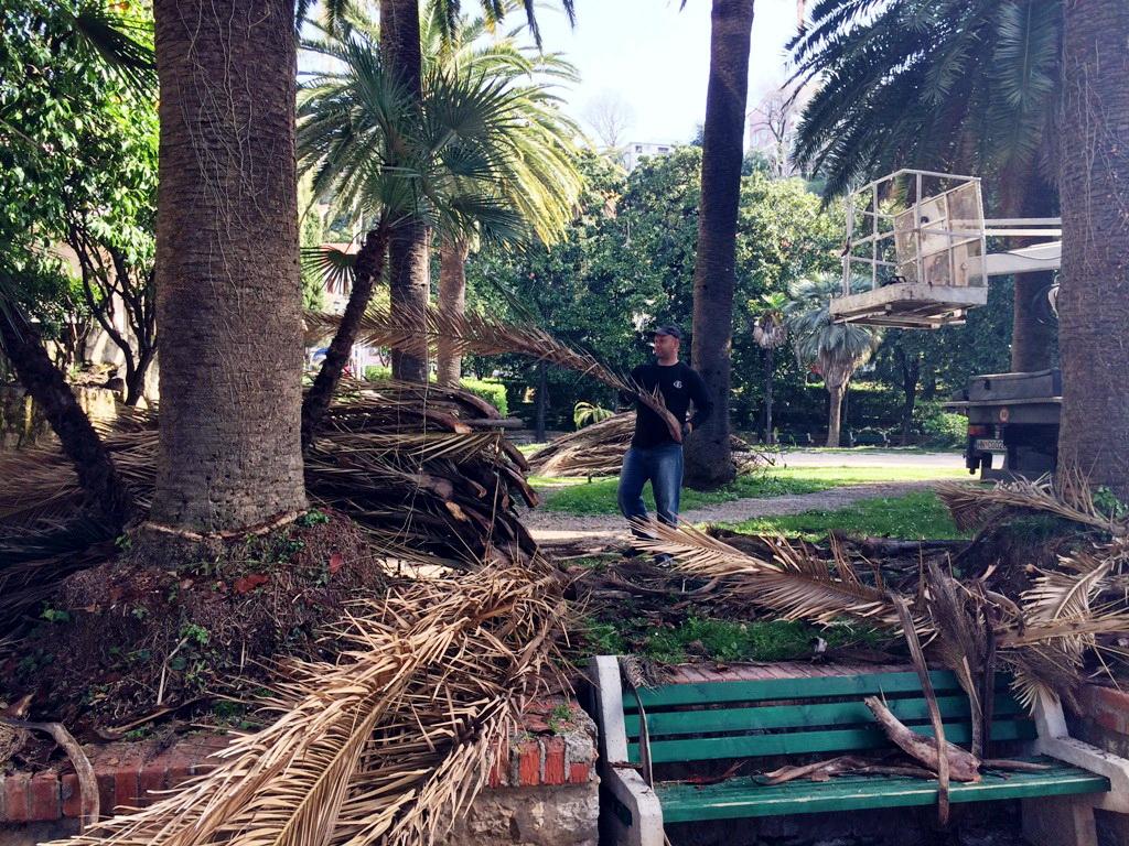 Uređenje palmi u Parku Boke