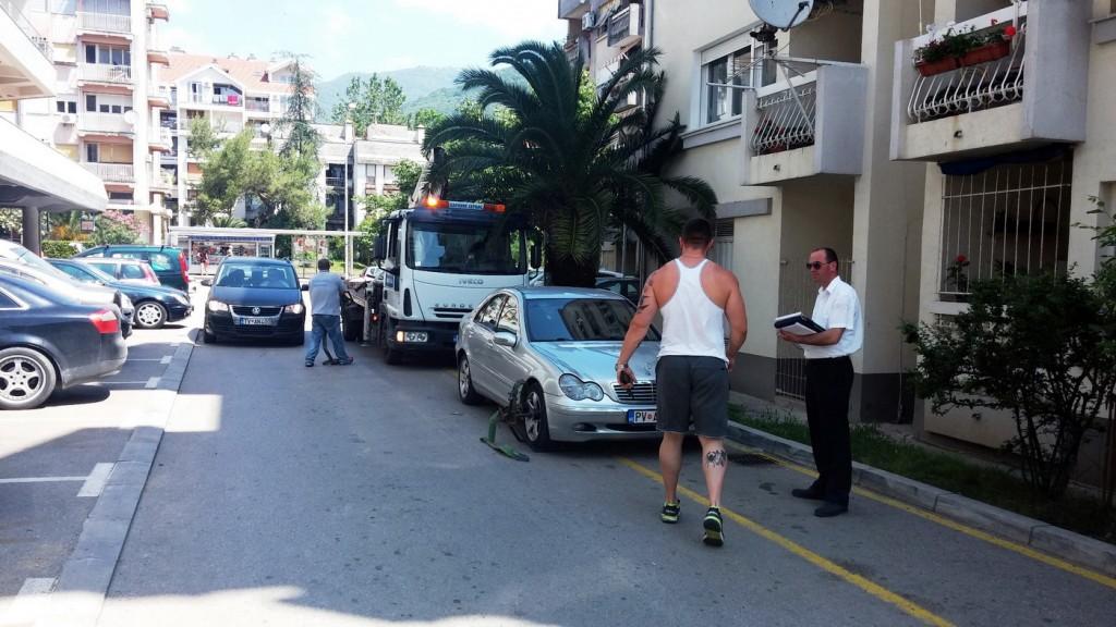 Komunalna policija i pauk opet u akciji -danas u Tivtu
