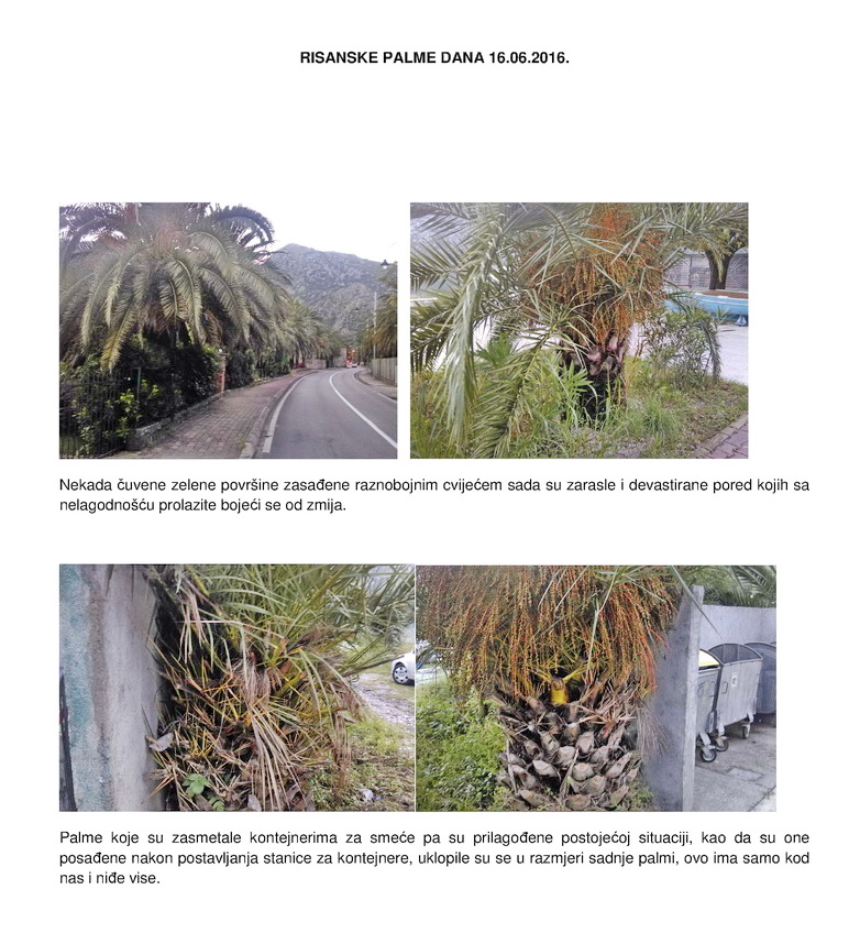 Risanske palme
