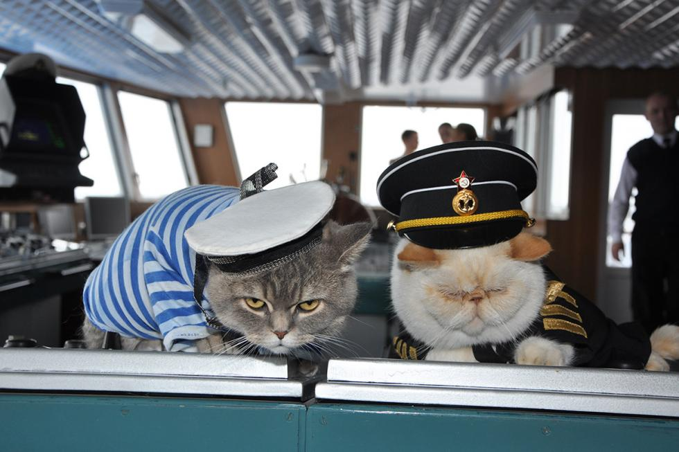 Mačke na kruzeru