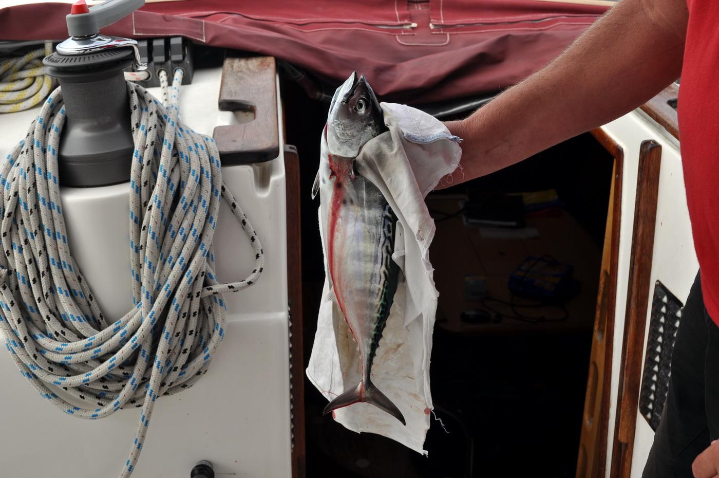 Ribanje iz broda - foto Boka News