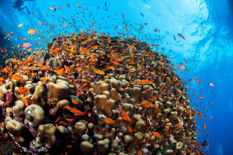 Podvodna fotografija