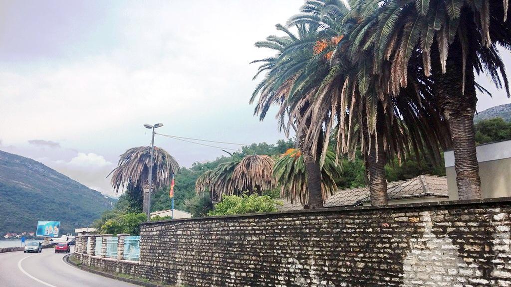 Surlašem unistene palme u krugu vojnog objekta Opatovo