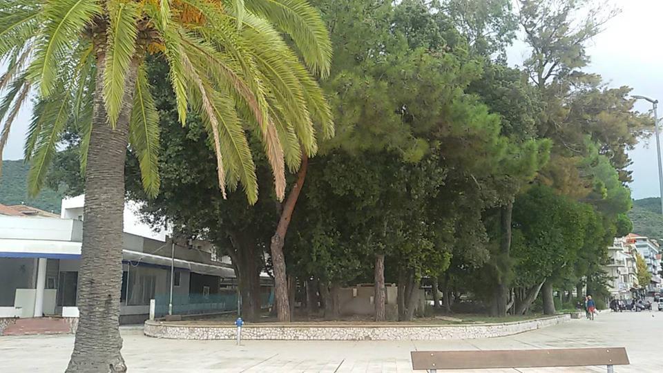 Mimozin park prije sječe