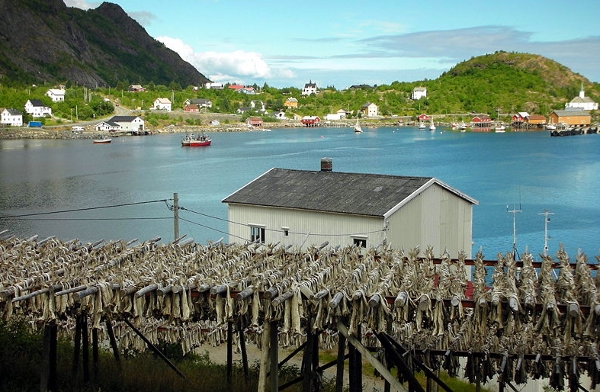 Bakalar sušenje Norveška