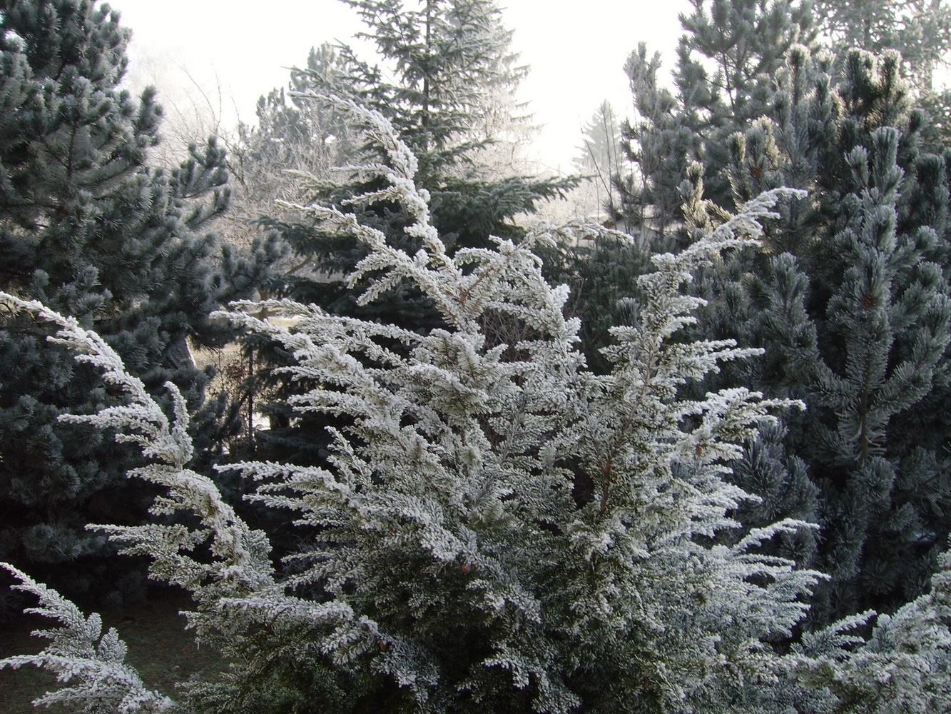 Vrijeme, mraz - foto Boka News